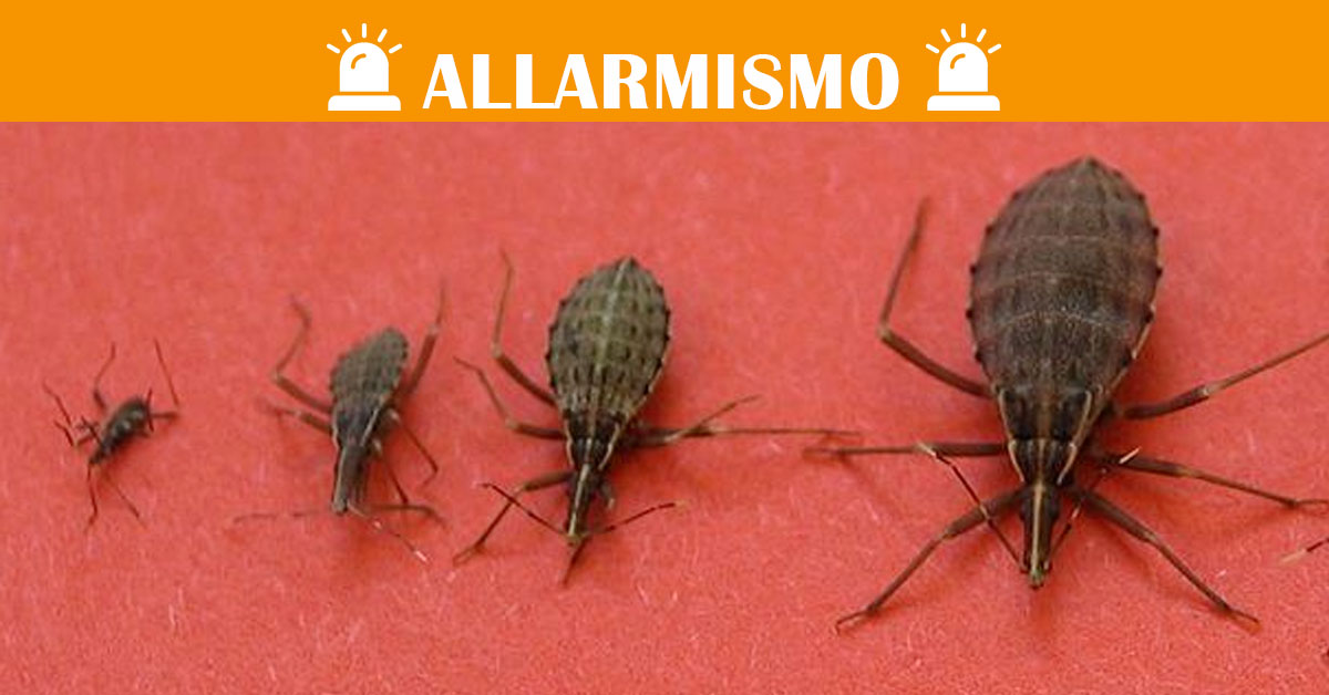 insetto in casa