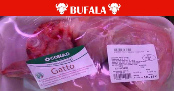 carne di gatto conad