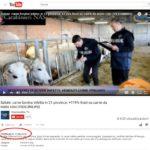 Shock! La carne bovina infettata da AIDS, sequestri in tutta italia. è allarme! (VIDEO) 5