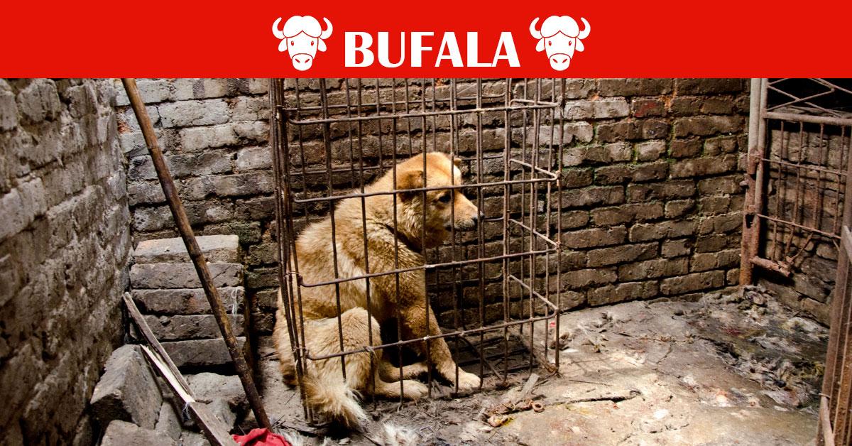 Cani nel ristorante cinese