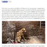 Firenze: macellava i cani nel garage e li serviva nel suo ristorante cinese 2
